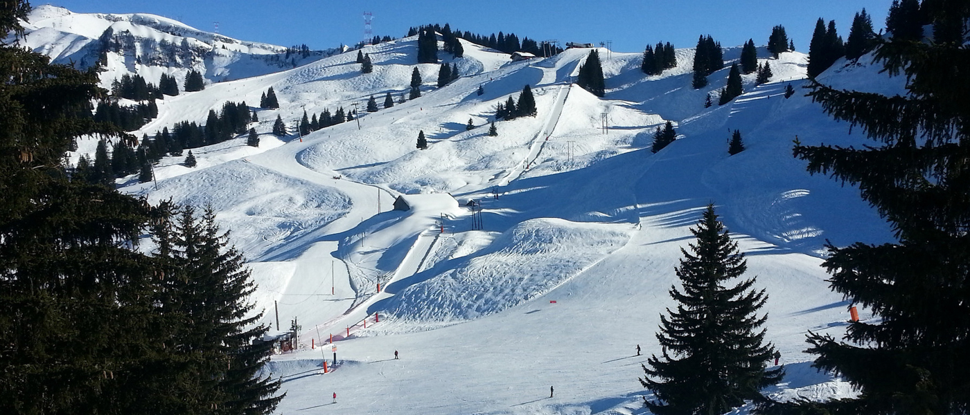 Snowy piste in a ski resort bordered by fir trees